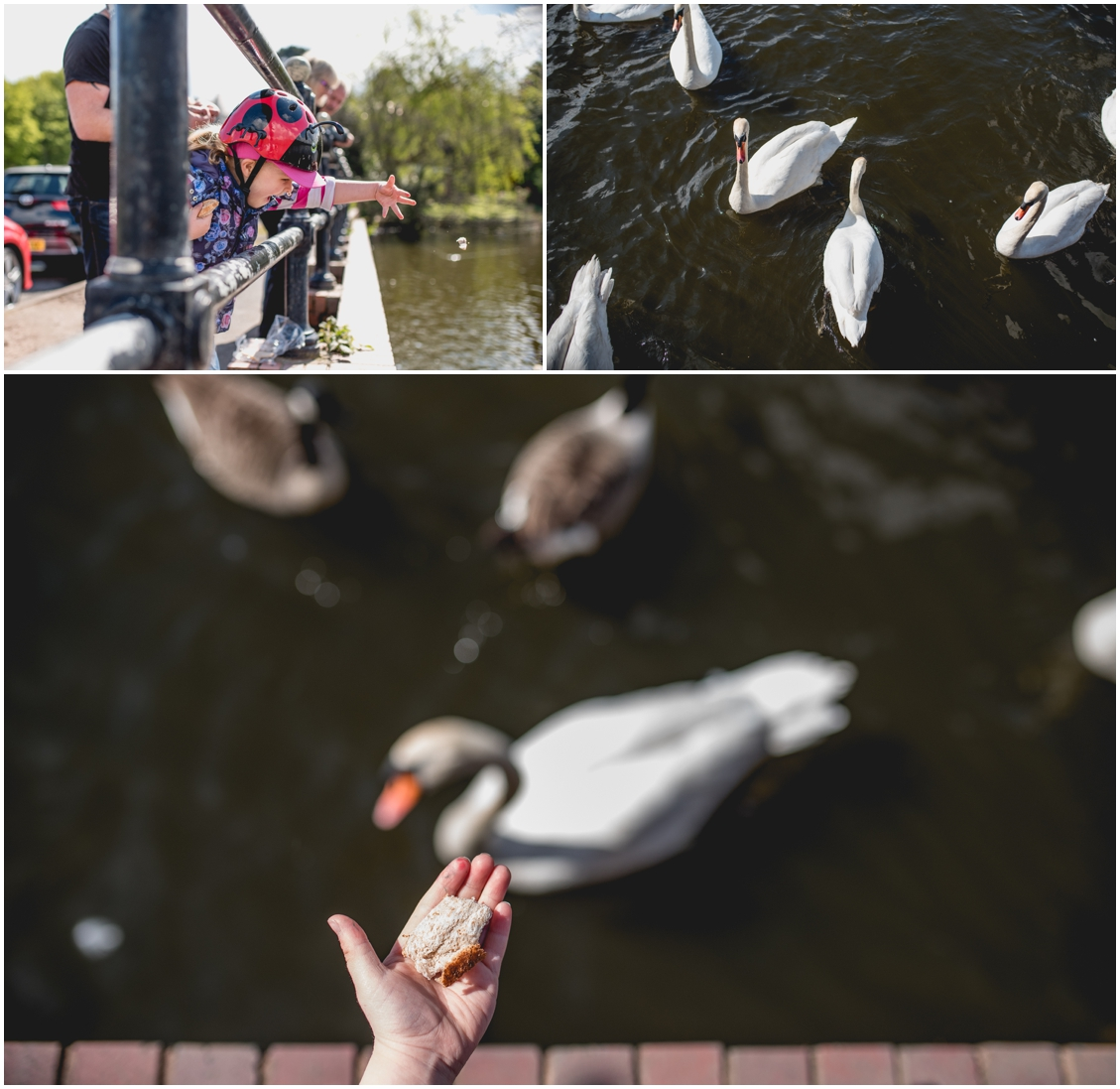 Nikon D750, Sigma 1.4 ART,  personal post, Sutton Park, Frankie, bike riding, message in a bottle, West Midlands Wedding Photographer