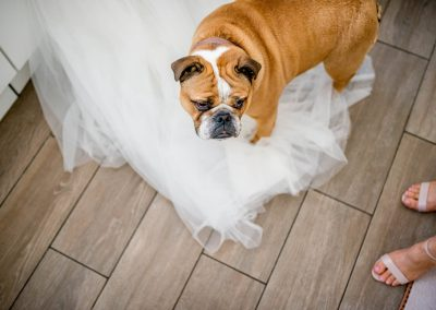hannah_tom_wedding_0059_wedding and dog