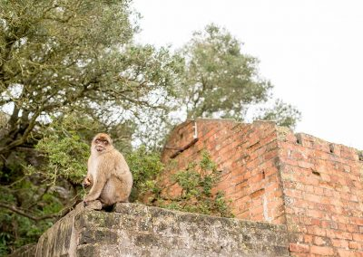 Gibraltar Wedding and Travel photography monkeys
