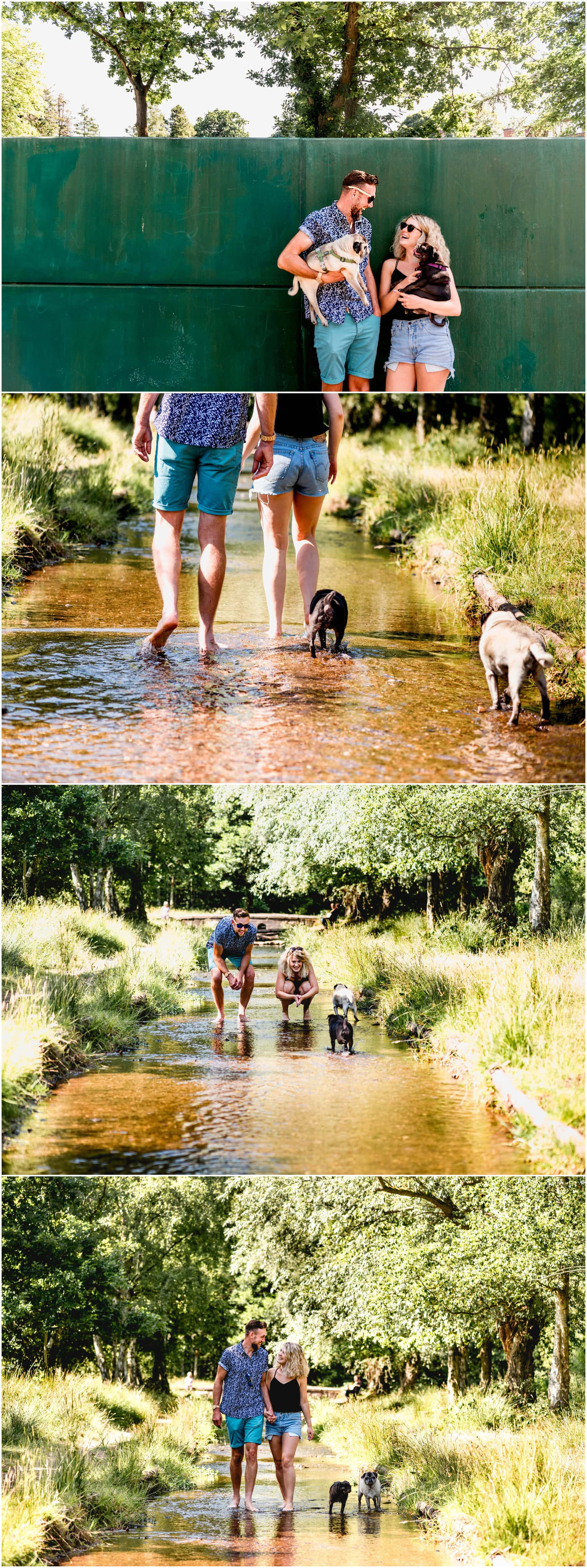 Couple's shoot with their two pugs paddling in the stream in flip flops